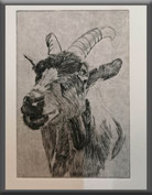 Ziege, Tiere, Radierung, Grafik, Druckgrafik, Original, Druck, Originaldruck, Stich, Stahlstich, Kupferstich, graphic, printmaking, etching, drypoint, copper, papier, goal, animal, drawing, print, original print, original