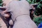 象の頭、毛がよく見えなくて残念