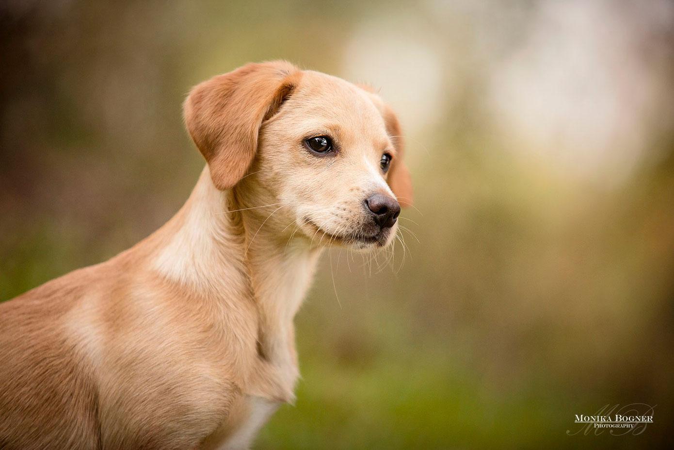 Hundewelpe im Herbst, Fotoshooting mit Hund