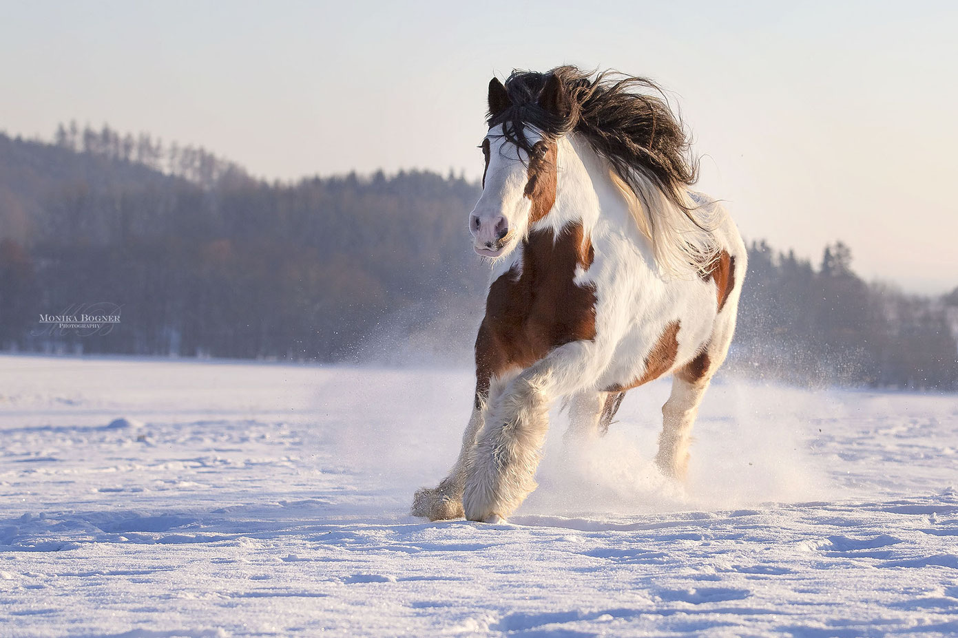 Tinker im Schnee, Pferdefotografie
