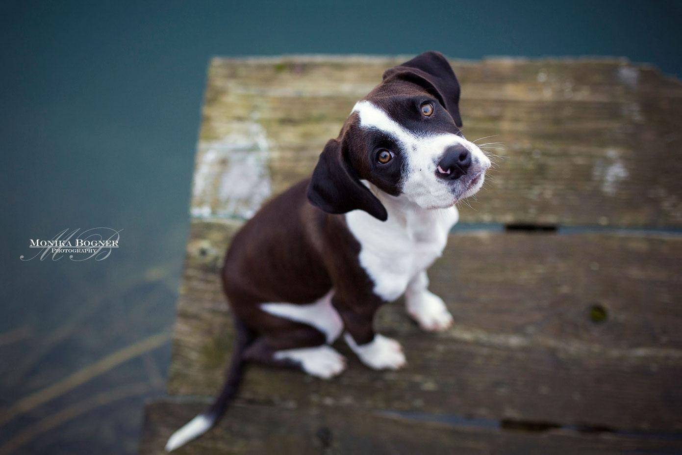 spanischer Straßenhund, Welpe Fotoshooting