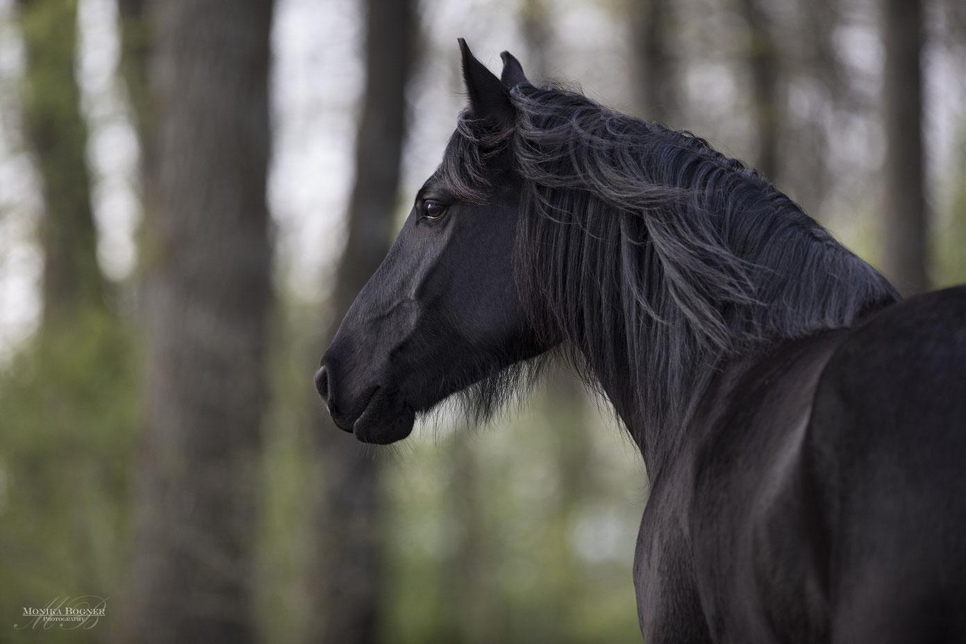Pferdeportrait bei schlechtem Wetter