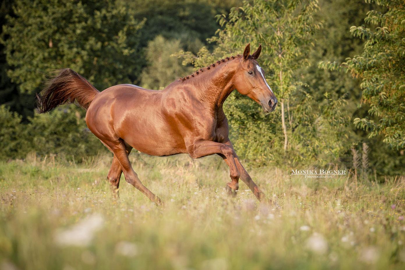 Pferd auf der Koppel beim Fotoshooting