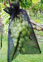 VOWE-Netzbeutel schwarz für Trauben in Hausgarten, Pergola und Rebberg