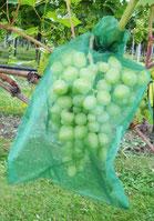 VOWE-Netzbeutel grün für Trauben in Hausgarten, Pergola und Rebberg