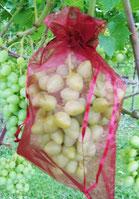 VOWE-Netzbeutel rot für Trauben in Hausgarten, Pergola und Rebberg