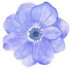 青花のイラスト