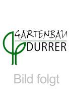 Debora Sohm - Durrer Gartenbau AG Herzogenbuchsee