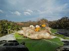 Yaconknollen und Yaconblüten liegen auf Yaconblätter, im Hintergrund das Yaconfeld unter blauem Himmel