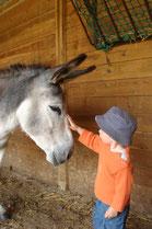 pension 02 aisne chevaux ane