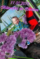 11.05.2013 Der kleine Max erkundet das Blütenfest...
