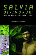 salvia divinorum medicament des shamans