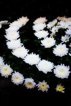 葬儀のイメージ 白菊2