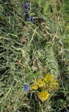 Almenland bio heno con hierbas