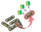 抗体ダイレクトクローニング技術によるモノクロナール抗体作製サービス