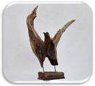beeld van een adelaar