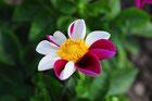 Blühende Besonderheiten