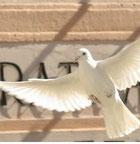 Tauben zur Hochzeit