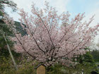 tyanmaruとお友達さん:東京都千代田区半蔵門・国立劇場前庭