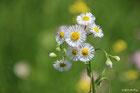 野の花トップ