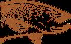 la truite fario