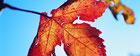 demeter weingut villány villany naturwein terroir-wein terroir wein wein ungarn weine ungarn ungarischer wein ungarische weine bio weingut bio-weingut biowein bio-wein öko-wein ökowein demeter veganer wein online kaufen natural wine natural wines rotwein