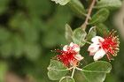 革鞄教室側の花