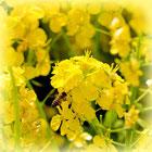 蜂蜜の喉の殺菌作用―はちみつの栄養効果