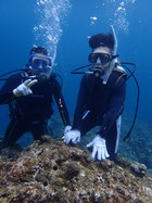のんびり石垣島で体験ダイビング