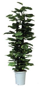 人工樹木ジャイアントポトスH1800