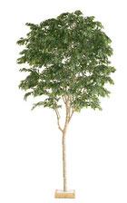 人工樹木ベンジャミンフィカスH3600