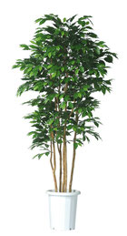 人工樹木ミックスフィカスマルチH1800