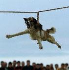 Sacrifice rituel de chien en Bulgarie