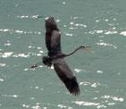 Heron | Key Biskane