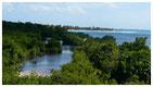 mangrove palétuviers guadeloupe