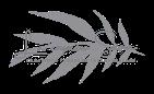 Logo de la cinquième saison : créations florales intemporelles.