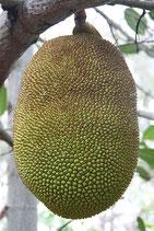 le fruit du jacquier