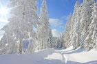 Lebensweg Karriere Orientierung Element Wasser Norden Winter