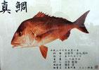 70cmオーバーでカラー魚拓