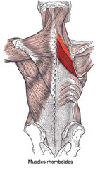 朝方の背中の激痛の原因