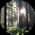 Vollmondsingen im Gebenstorfer Wald; Praxis für Naturheilkunde und Tibetische Medizin Baden