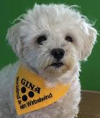 Tuch für Sehbehinderte oder Blinde Hunde
