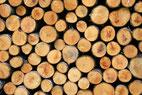 Waldfonds kommen immer mehr in Mode