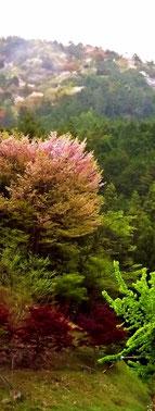 ゴールデンウィーク何処へ行こうか迷ったら岐阜県中津川付知へお出で下さい。