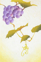 Grape-8  30x20cm