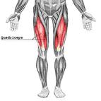 anatomie spieren benen bovenbeen