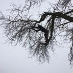 Einsatz der Seilklettertechnik beim Obstbaumschnitt in Biberach an der Riss