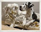 chien-destruction