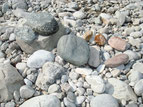 viel Steine gabs...