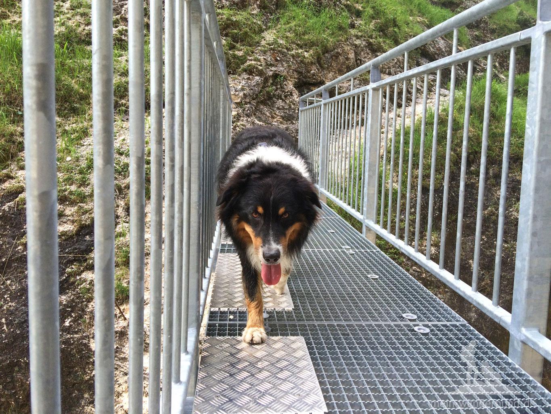 Wandern mit Hund in der Aschauer Klamm